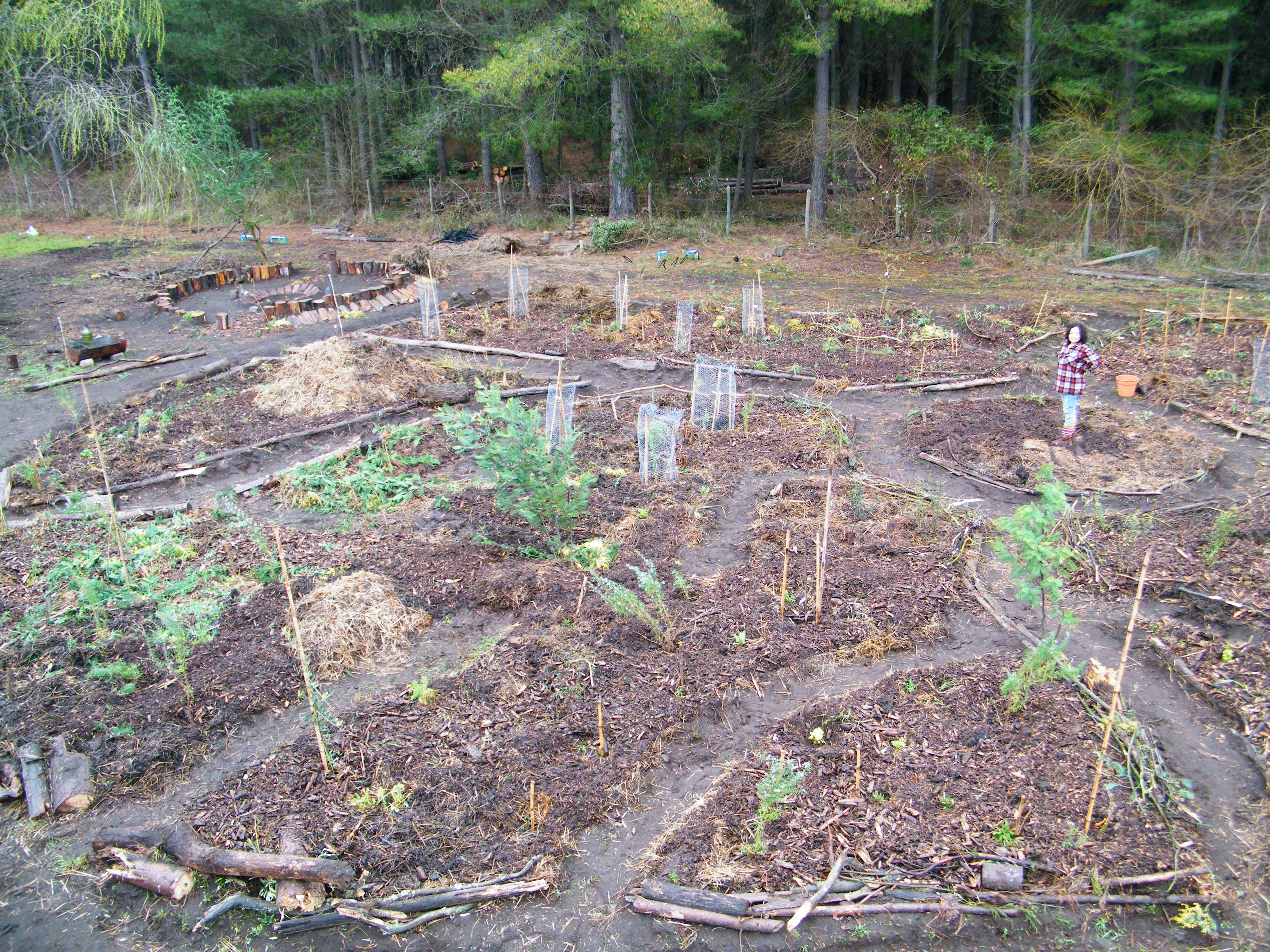 Forest Backyard Ideas : climateXchange ? Backyard Food Forest Gardens Course