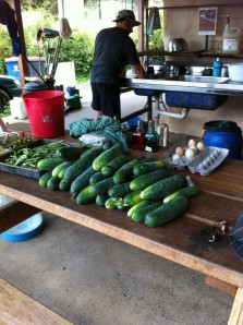Produce at Zaytuna Farm