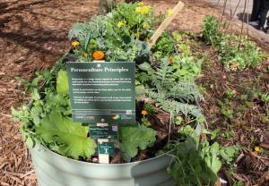 Permaculture principlease